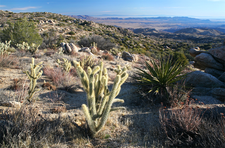 Sharp cacti and brambles can be seen, sweeping down a gentle slope into a deserted gorge beyond.